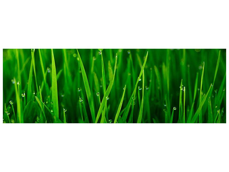 Panoramic Acrylic Print Grass With Morning Dew
