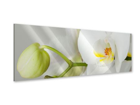 Panoramic Acrylic Print Giant Orchid