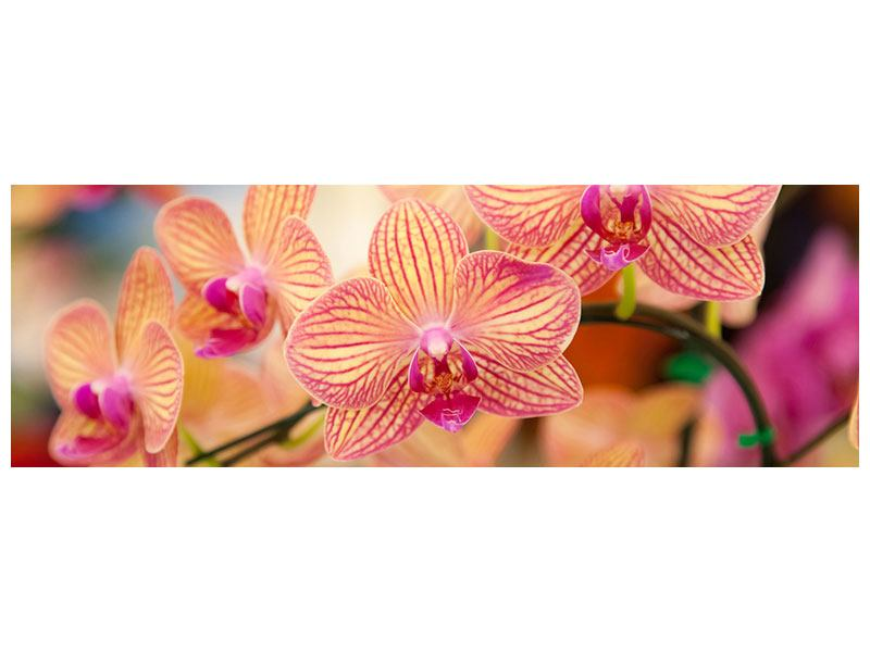 Panoramic Acrylic Print Exotic Orchids