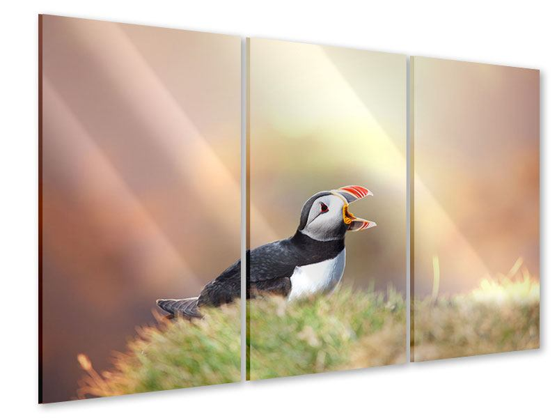 3 Piece Acrylic Print The Puffin