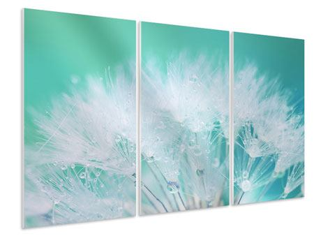 3 Piece Forex Print Close Up Dandelion In Morning Dew