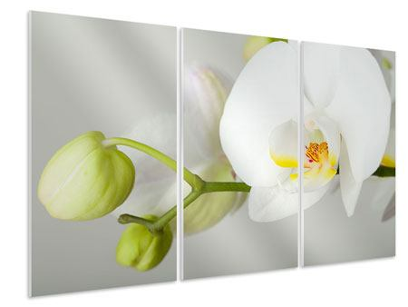 3 Piece Forex Print Giant Orchid