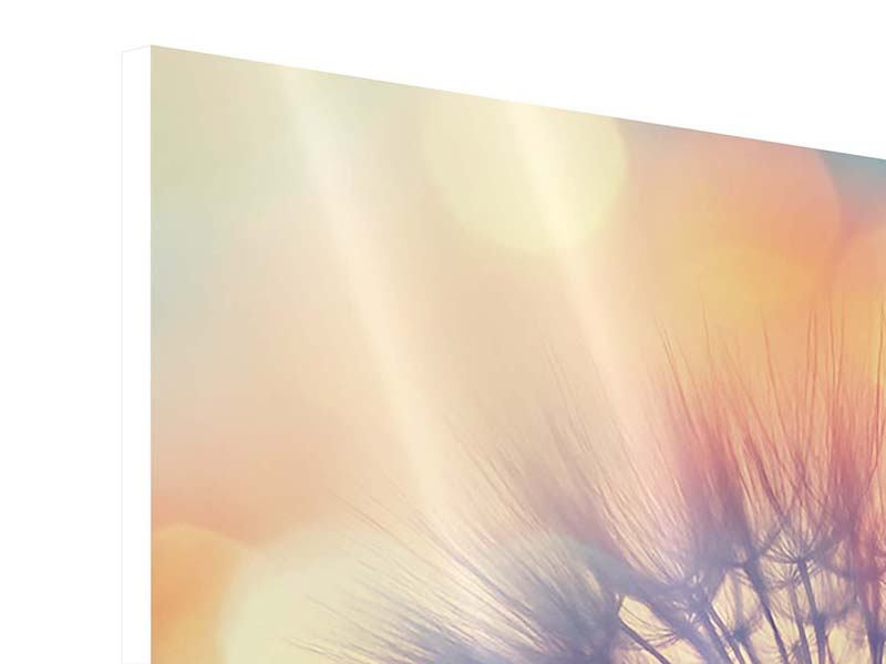 3 Piece Forex Print The Dandelion In The Light