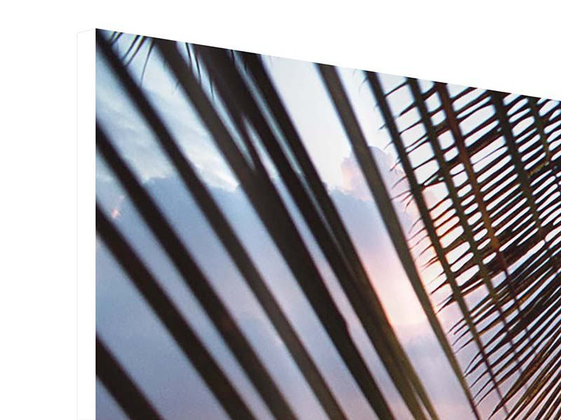 Panoramic 3 Piece Forex Print Under Palm Leaves