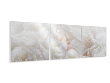 Panoramic 3 Piece Forex Print White Roses In The Morning Dew