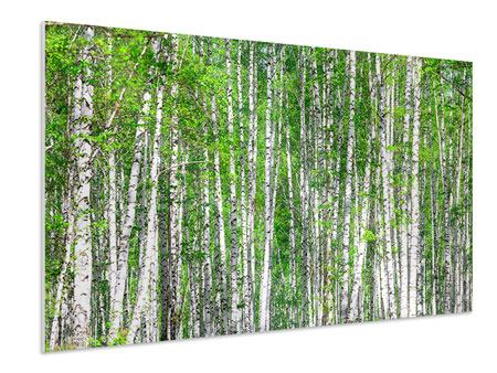 Forex Print The Birch Forest