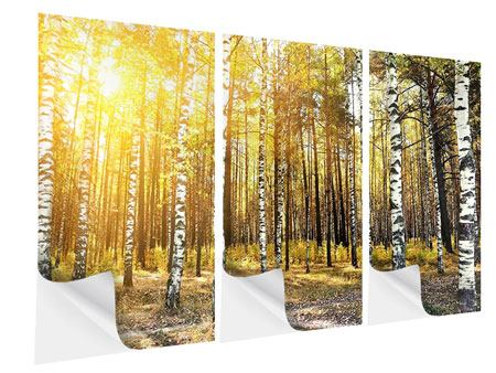 3 Piece Self-Adhesive Poster Birch Forest