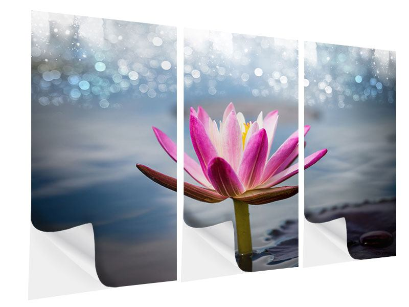 3 Piece Self-Adhesive Poster Lotus In The Morning Dew