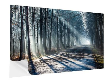 Self-Adhesive Poster Forest In The Light Beam