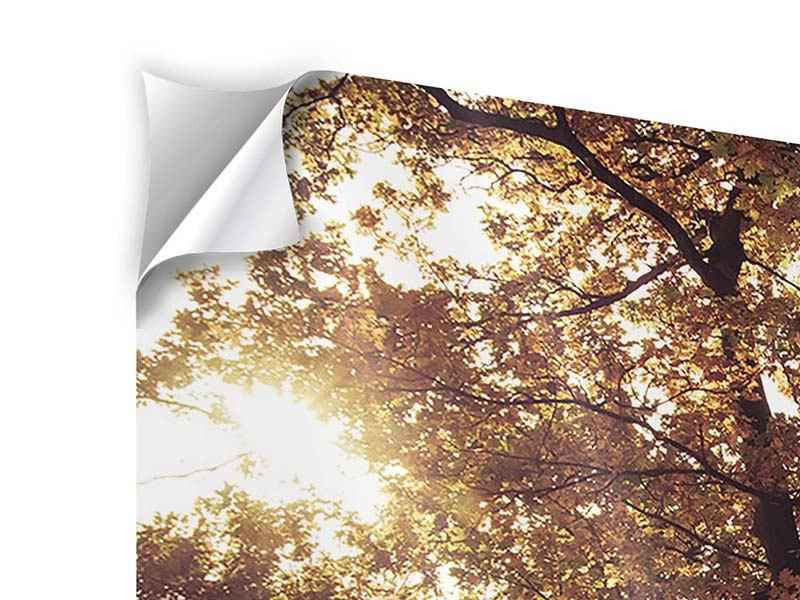 Modern 5 Piece Self-Adhesive Poster Landscape Park