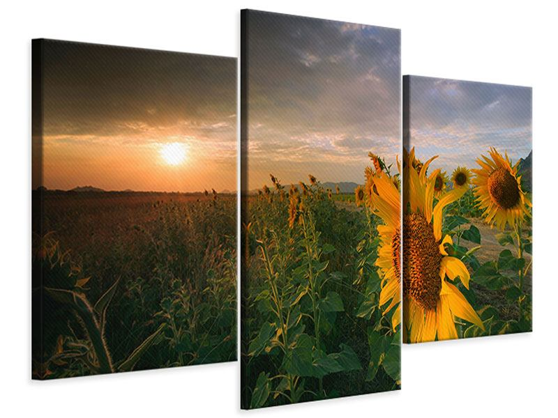 Modern 3 Piece Canvas Print Sunflowers In Play Of Light