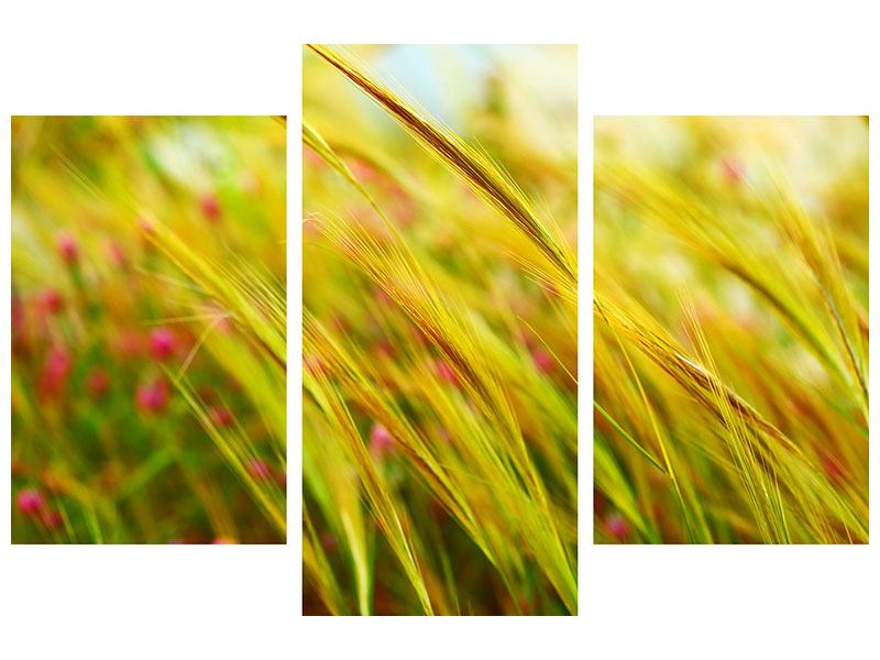 Modern 3 Piece Canvas Print The Wheat Field
