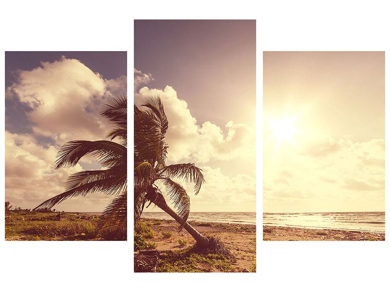 Modern 3 Piece Canvas Print The Crooked Palm