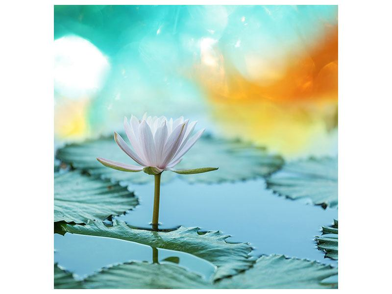 Canvas Print Dreamy Lotus