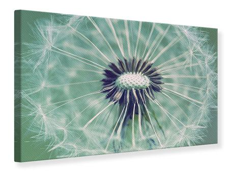 Canvas Print Close Up Dandelion