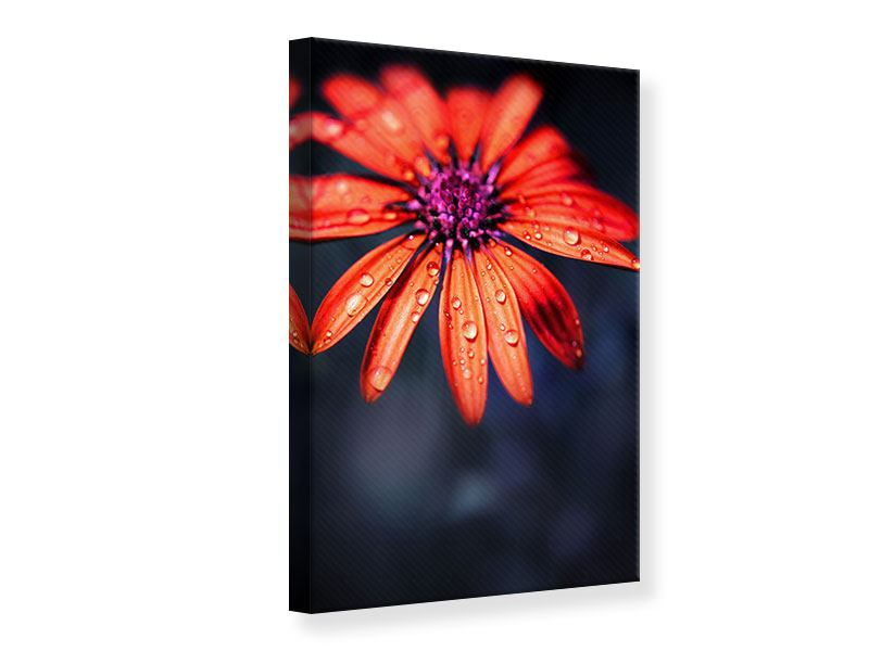 Canvas Print Colored Daisy