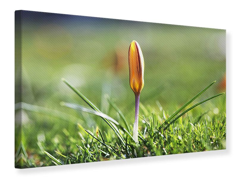 Canvas Print The Flower Bud