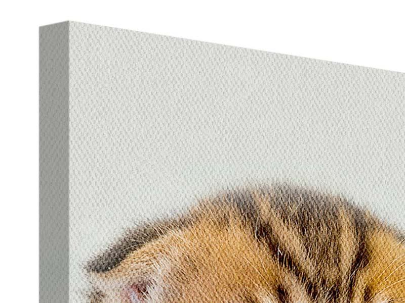 Canvas Print Folded Ears Kitten
