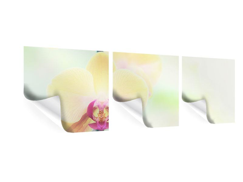 Panoramic 3 Piece Poster Lovely Orchid