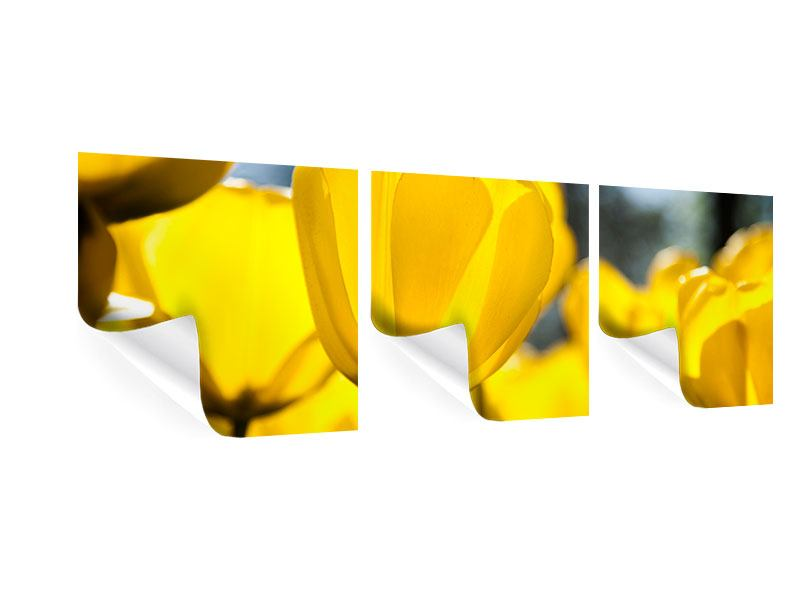 Panoramic 3 Piece Poster Yellow Tulips In XXL