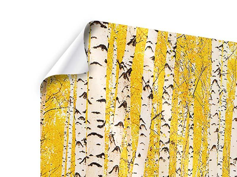 Poster The Birch Forest In Autumn