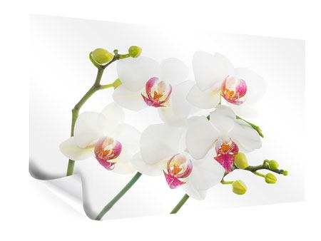 Poster Amore per le orchidee